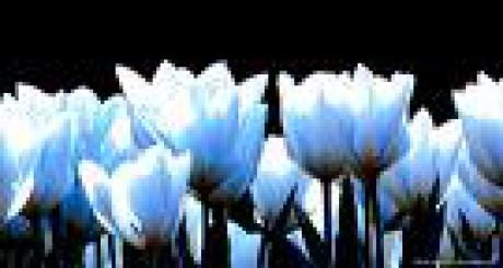 virtuální koťátka - Fotoalbum - Květinářství - Květiny k zakoupení ... 7f8cf813b4